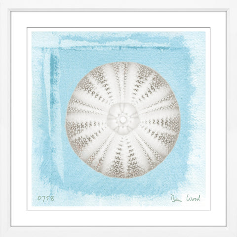 Framed Sea Urchin I