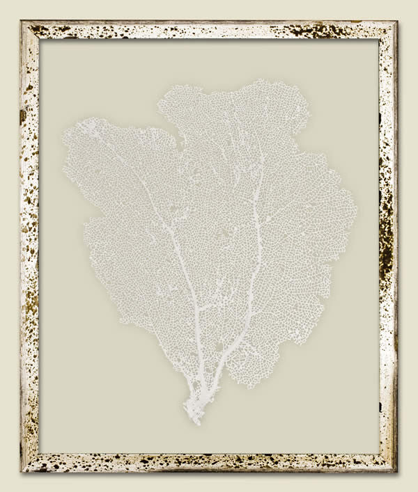 Small Framed Sea Fan - White
