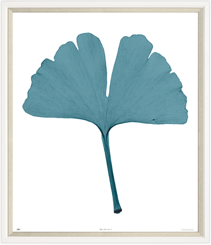 Trowbridge Gallery Gingko Leaf II