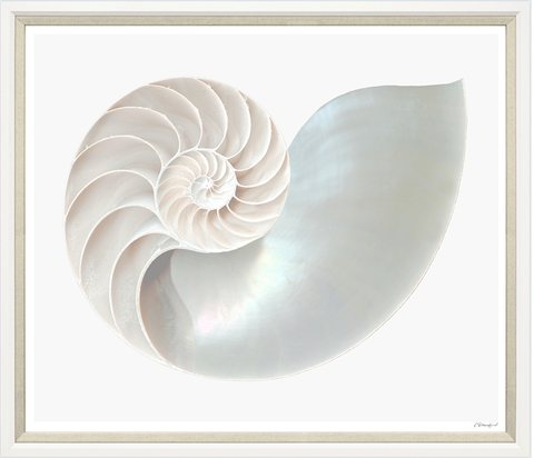Trowbridge Gallery Jumbo Nautilus