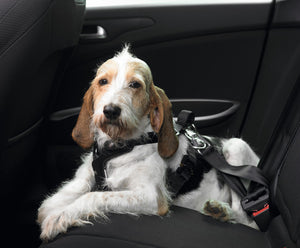 Car Safety Harness Easy Comfort