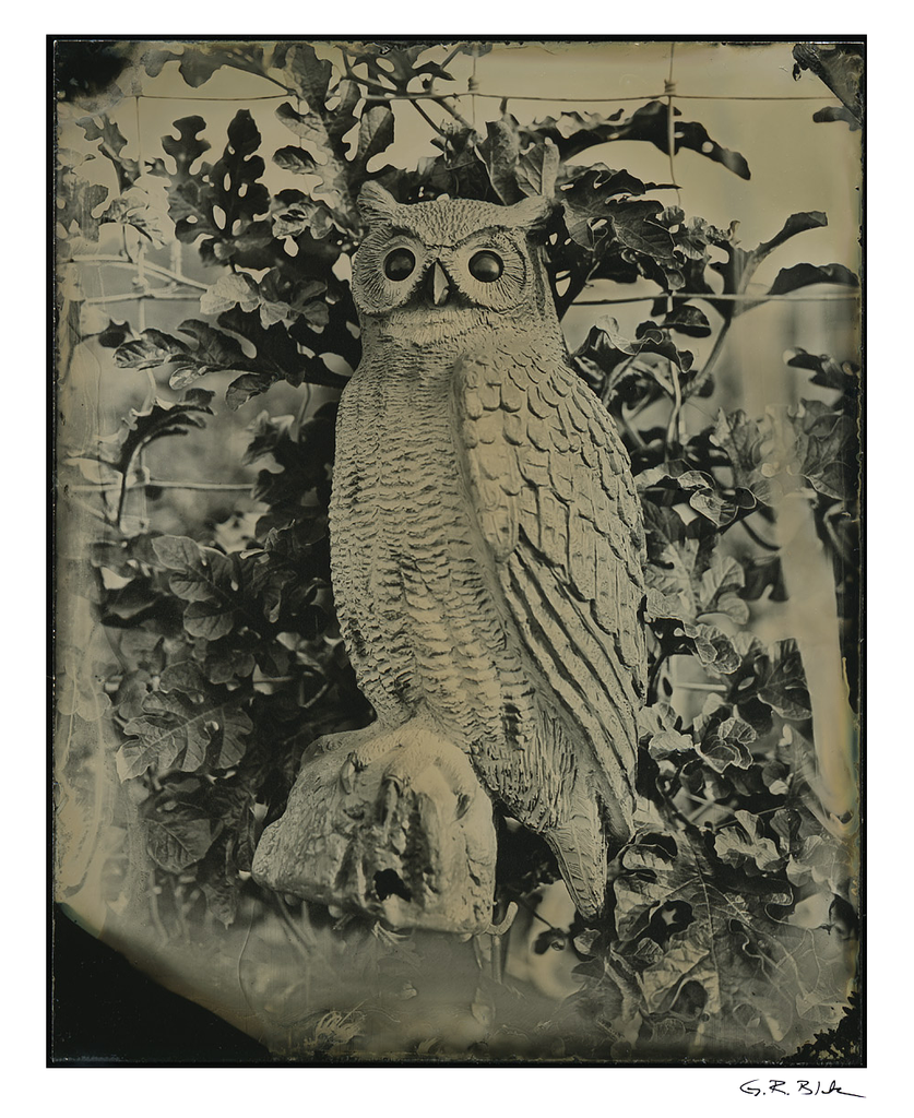 Garden Owl | Tintype Reproduction
