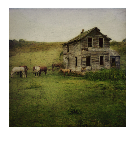 The Old Horse House | Distressed Polaroid Reproduction