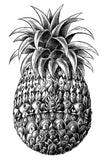 PINEAPPLE CLIP ART SHADED