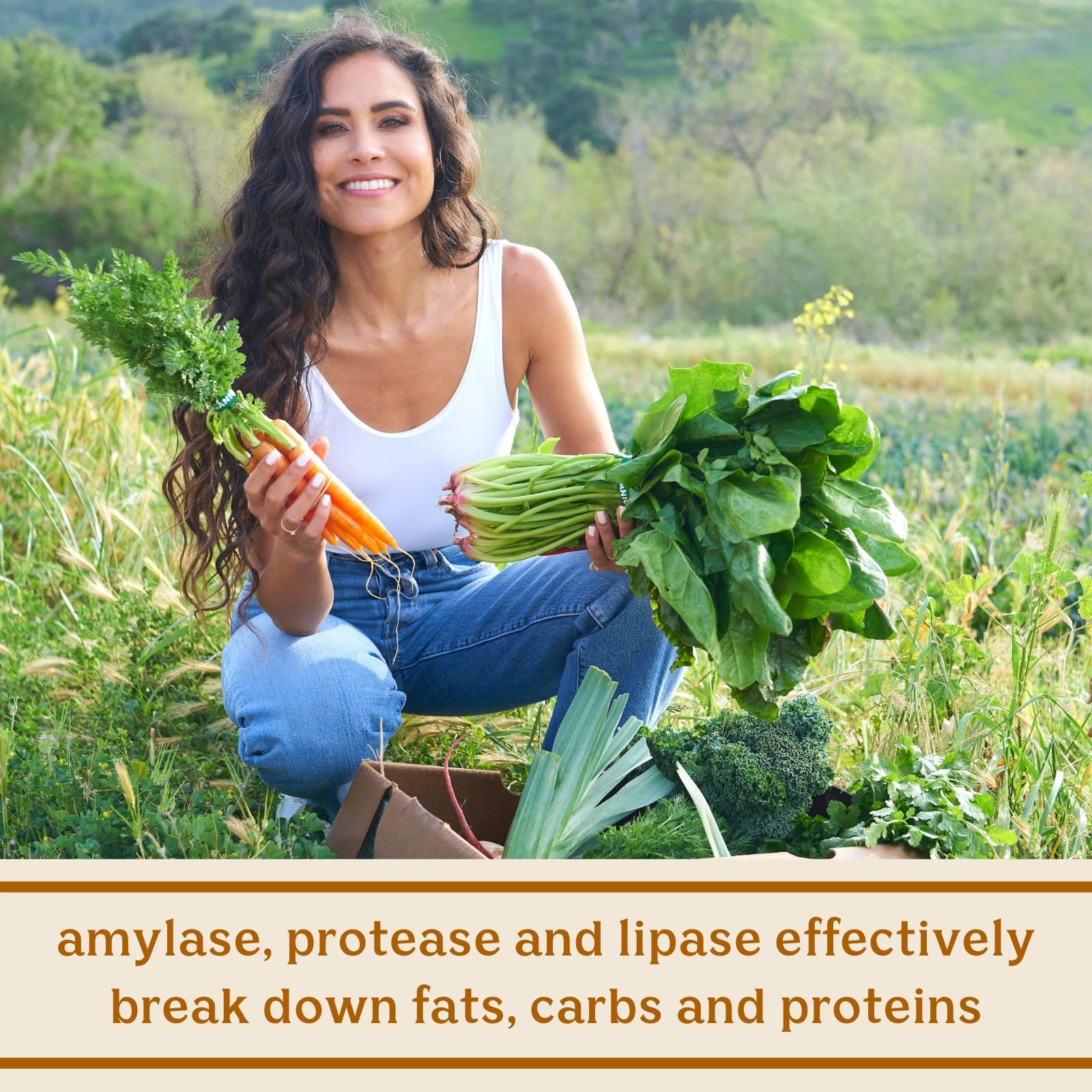 Solluna's Feel Good Digestive Enzymes key ingredient benefit description. Amylase, protease and lipase effectively break down fats, carbs and proteins