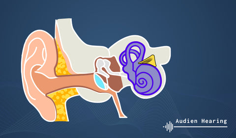 Diagram showing the parts of the external and inner ear