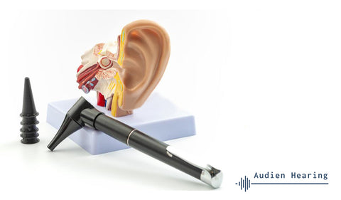 Image of anatomical model of the ear