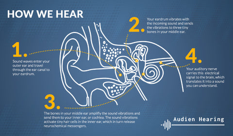 Infographic of detailing the process of hearing