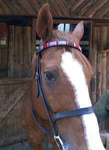 Pony, Cob & Horse Browbands