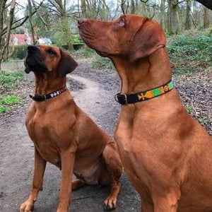 "18""-20"" Large breed Dog Collar (1"" wide)"