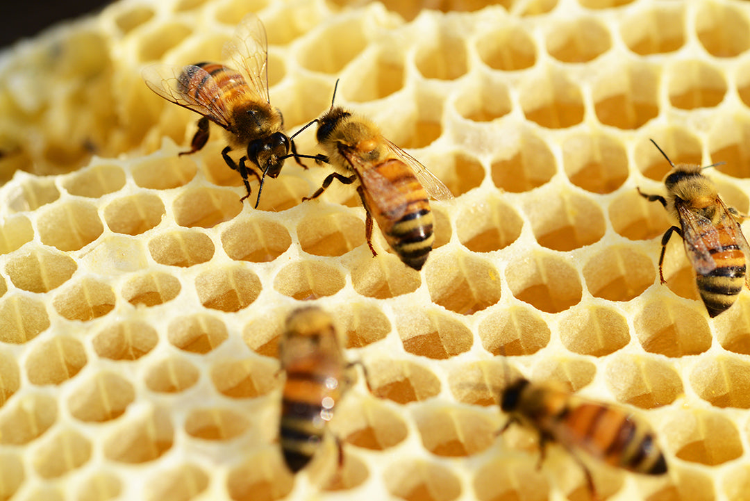 Why Raw Honey Makes All The Difference