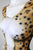 Women's Cheetah Catsuit/Bodysuit