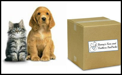 Buddy Box for Multiple Pet Families