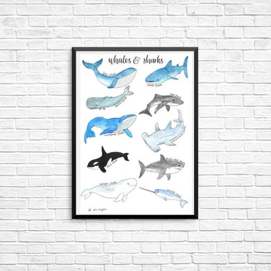 Whales & Sharks A2 Poster