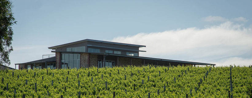 Image of the Clare Valley cellar door space. Cellar door is in the background against a blue sky, while rows and rows of vines with bright green leaves cover the foreground.