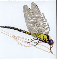 Album Cover of Strawbs - Dragonfly
