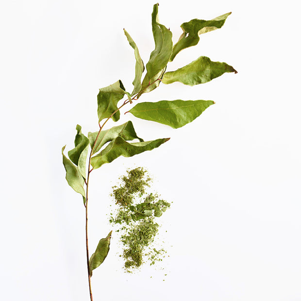 Limited: Curry Leaves 1