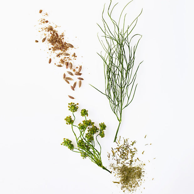 Dill Seed 1