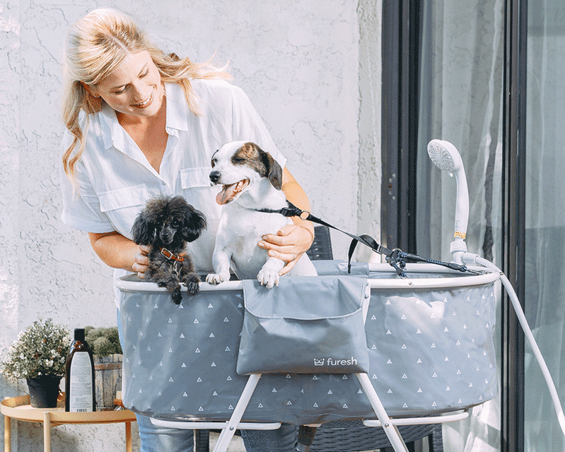 A woman bathing two dogs in a folding dog bathtub with safety harness