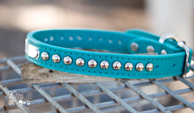 Turquoise Leather Collar With Silver Dome Studs and Personalized Name Plate