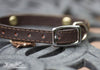 Small Pet Collar With 12 Gauge Conchos, Silver Spots and a Personalized Engraved Name Plate