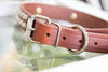 Brown Leather Studded Collar With Engraved Name Plate in Brass or Silver