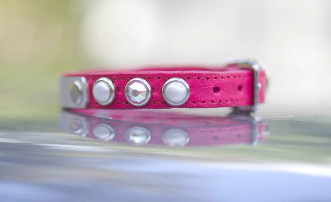 Teacup Personalized Dog Collar