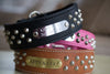 2 inch leather dog collar with silver cone studs and a brass or silver name plate