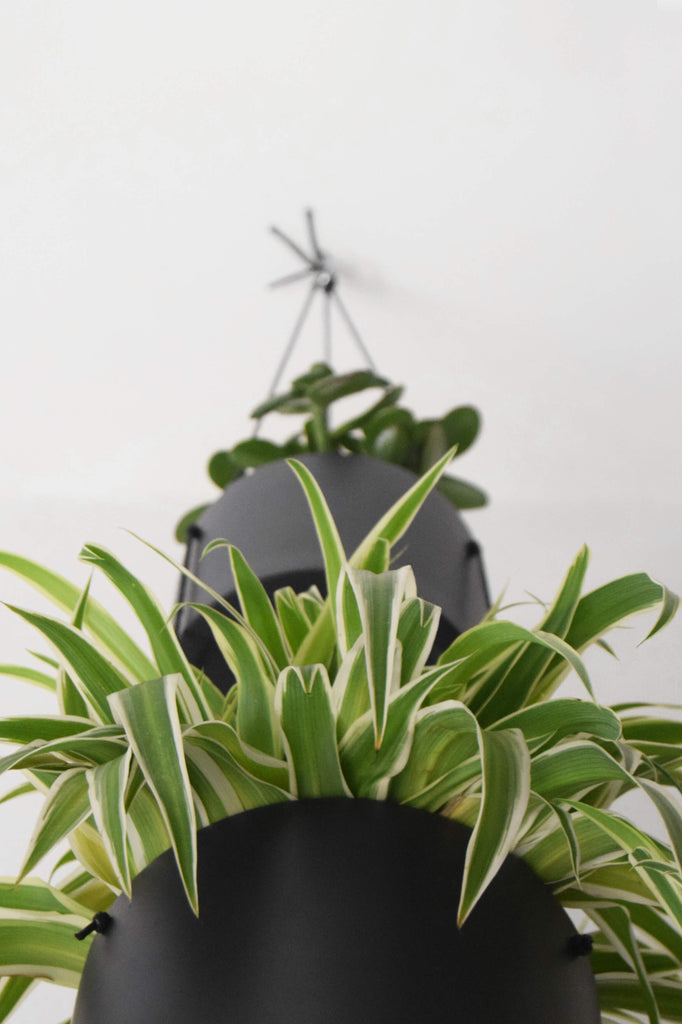 JYSK Hanging Planter