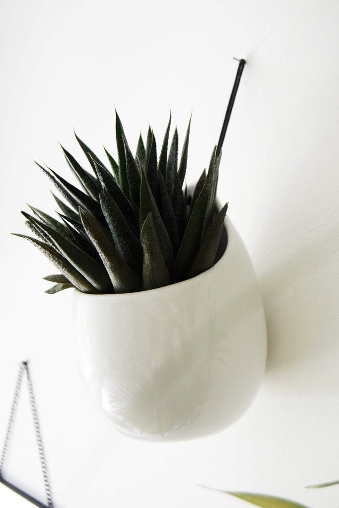 JYSK Ceramic Wall Planter