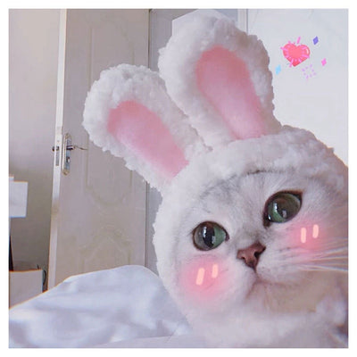 Pets Hat Rabbit Costume