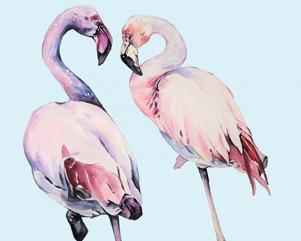 White Flamingos - Paint by Numbers Kits