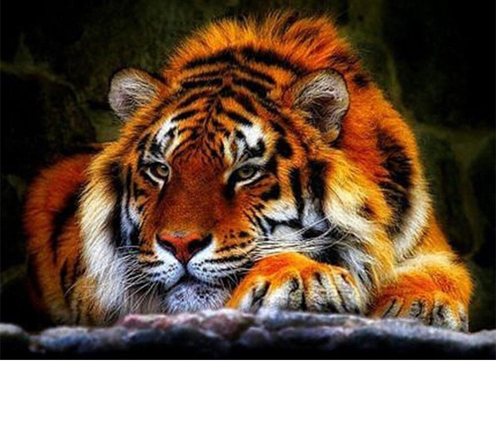 Sleepy Tiger Display - 5d Diamond Painting Kit