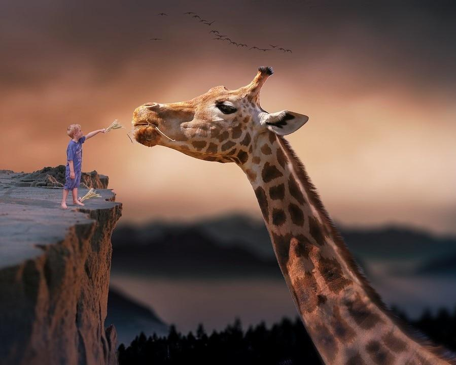 Giraffe Feeding - Paint By Numbers Kits