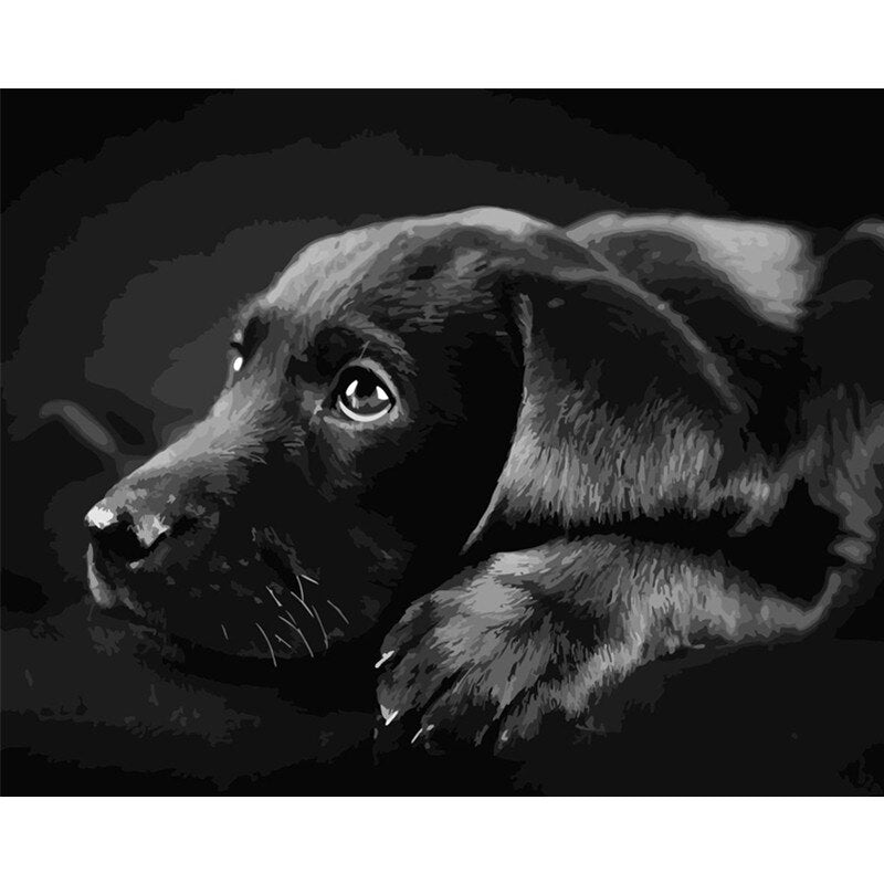 Black Labrador - Paint By Numbers Kit