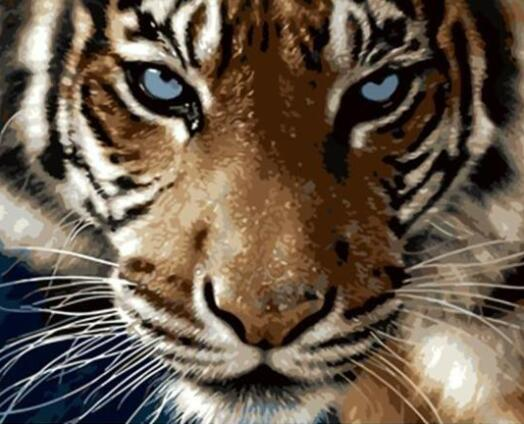 Blue Eyes Tiger - Paint by Numbers
