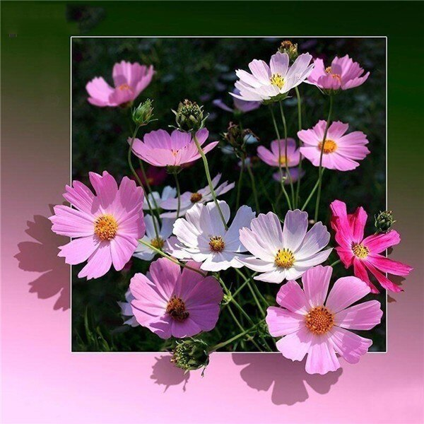 Flowers Out Of Frame - 5d Diamond Painting Kit