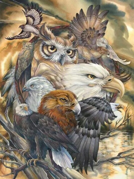 Eagles & Owl - Paint by Numbers Kits for Adults