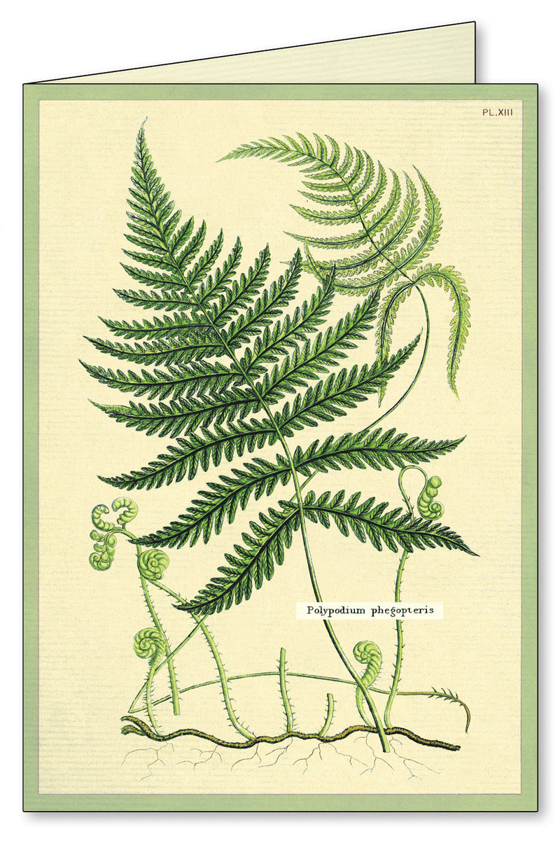 Ferns Boxed Note Cards