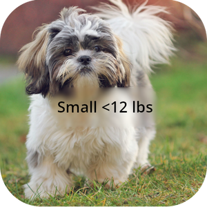Small Dogs <12 lbs