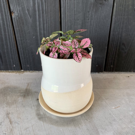 "4"" Form Planter No. 6 + Live Plant"