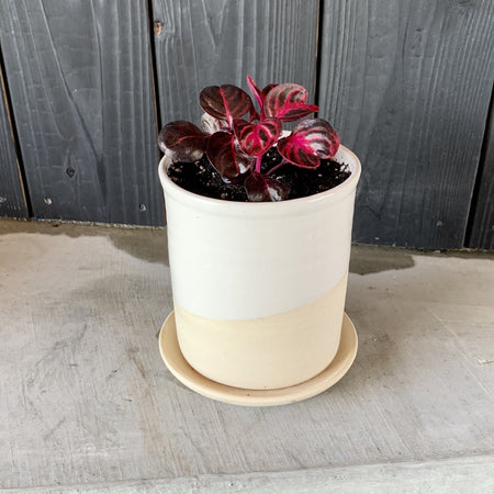 "4"" Form Planter No. 5 + Live Plant"