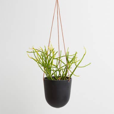 Block Color Hanging Planter - Midnight