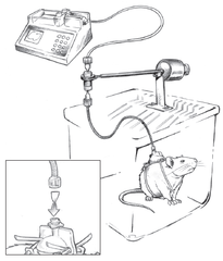 Rodent Infusion System