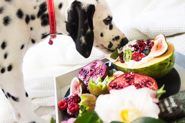 Can Your Dog Eat the Fruits and Vegetables You Eat?