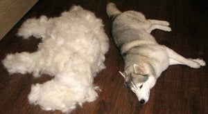 TIRED OF EXCESSIVE SHEDDING? TRY THESE 5 TIPS