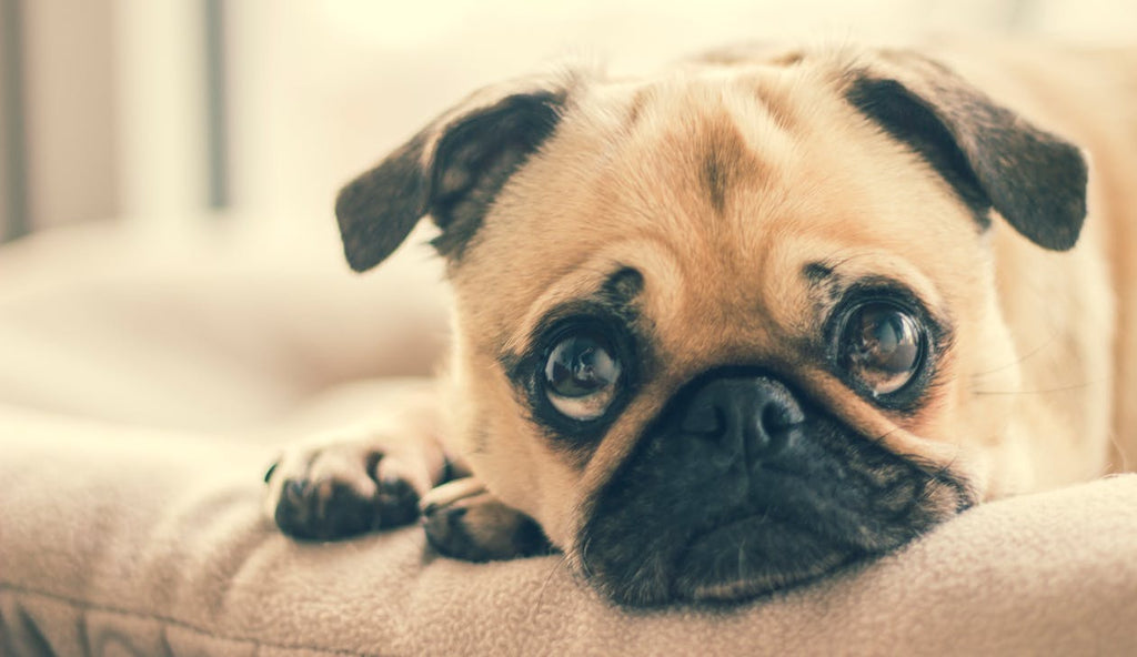These 5 Things You Do Harm Your Dog