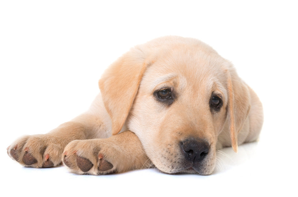 8 Signs That Your Dog Might Have A Serious Health Problem