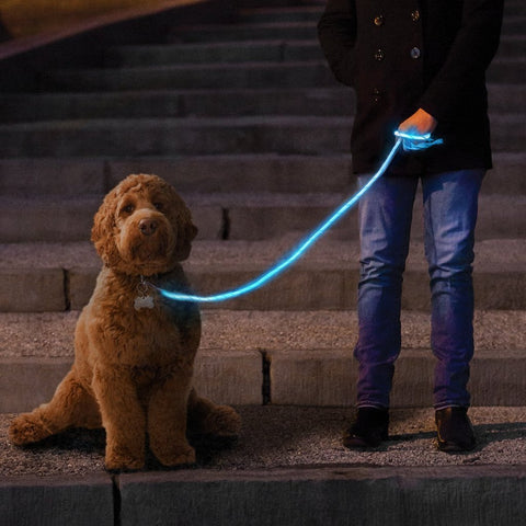 Dog Leash Glowing With Blue LED light