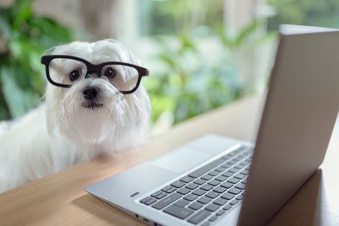 dog using laptop